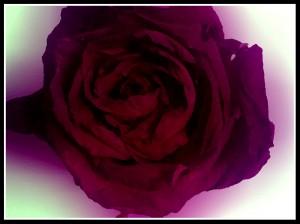 PicsArt_1425402299623